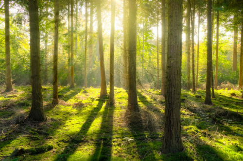 image-green forest