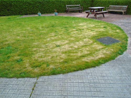 A garden at Rampton Hospital with grass and benches