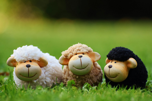 Three toy sheep